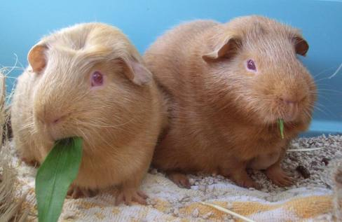 Fred and George 2008