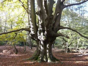 majestic epping forest tree