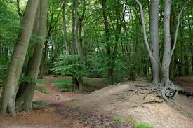 iron age fort epping forest