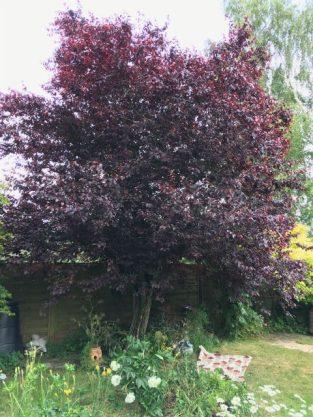 My Tree photo
