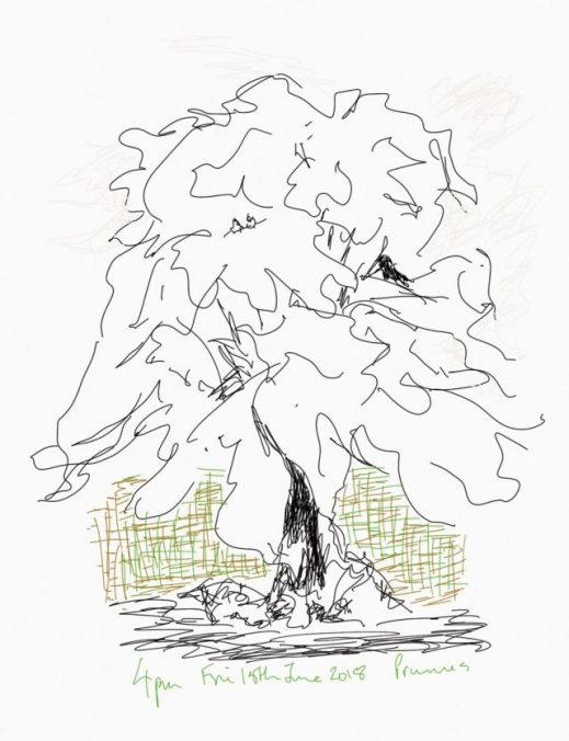 My Tree sketch