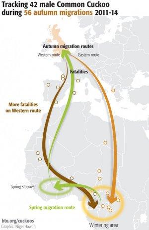 cuckoo migration BTO