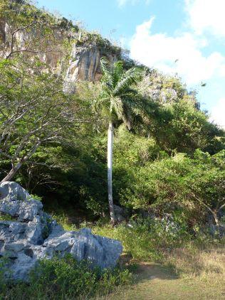 la grotte se trouve juste au pied de cet arbre, enfin apres quelques marches !!!