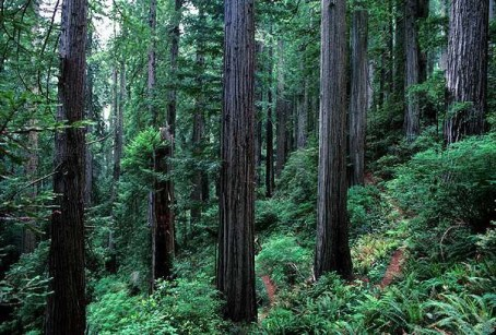 Redwood National Park, California, USA (Endor) - 41°12' N, 124°00' O