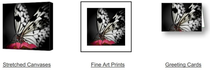 The Butterfly Emerges on Fine Art America