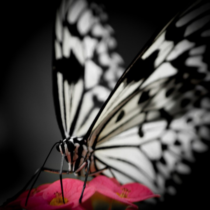 Caught in The Act : The Butterfly Emerges