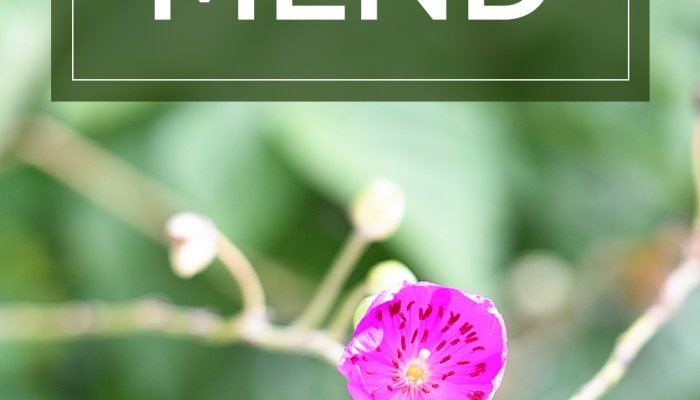 My Mantra for August: MEND