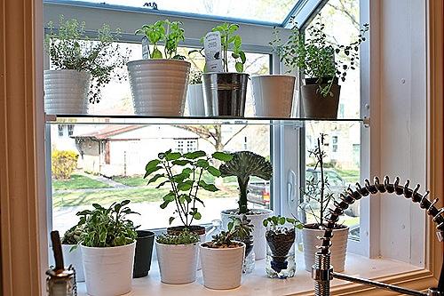 Garden Design Garden Design With Kitchen Window Design Ideas
