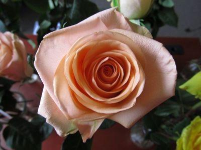 rozyi sort tiffani - История сортовых роз