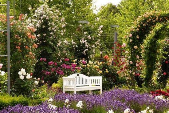 розарий в саду