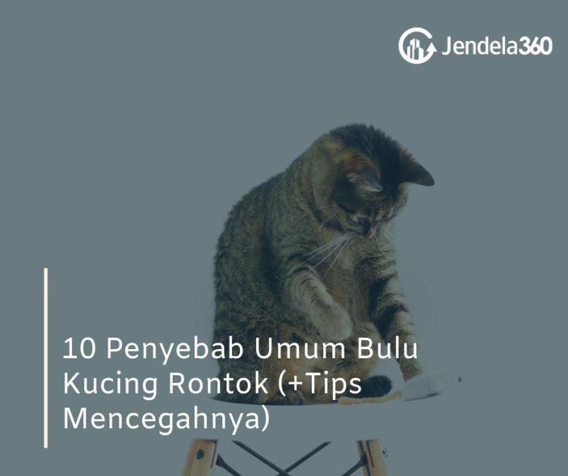 10 Penyebab Umum Bulu Kucing Rontok (+Tips Mencegahnya)