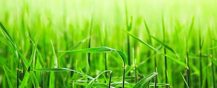 agen acemaxs surabaya Hama dan Penyakit pada tumbuhan