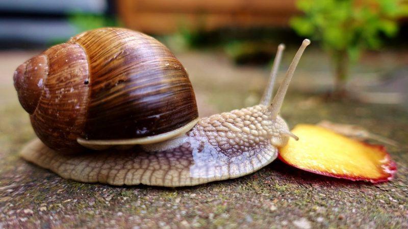 contoh hewan mollusca
