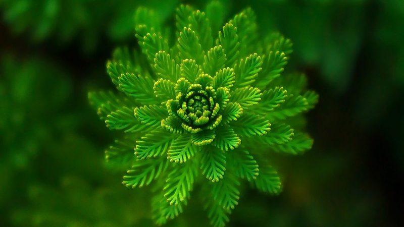 jenis jenis tumbuhan paku