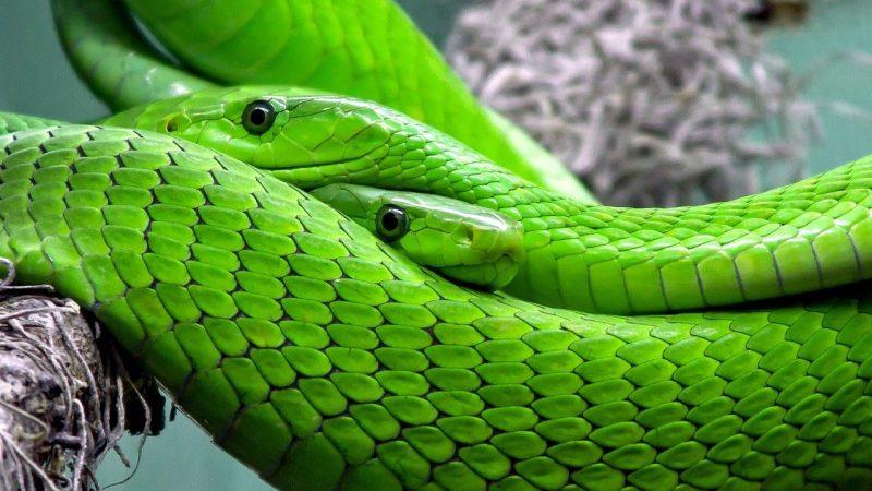 Contoh Hewan Reptil dan Nama Latinnya