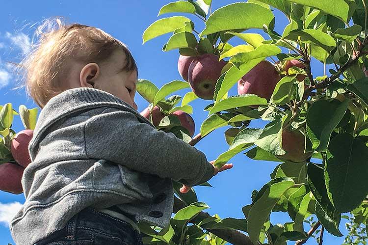 baby-picking-apples