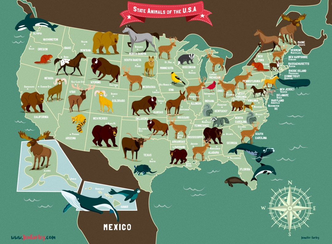 State Animals Of The USA Map | Jennifer Farley Illustration ...