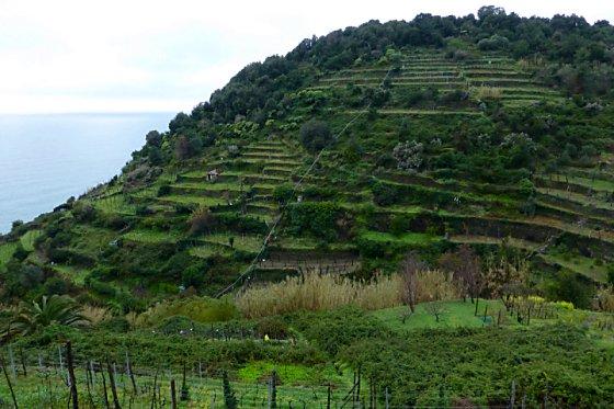 Terraced coast landscape