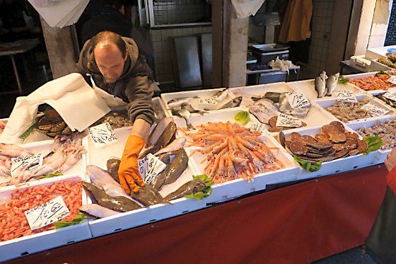 Fish stall with several different fish and shrimp selections.