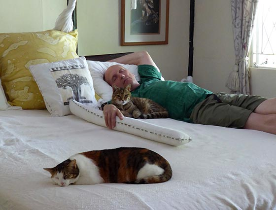 Mike napping with two cats.