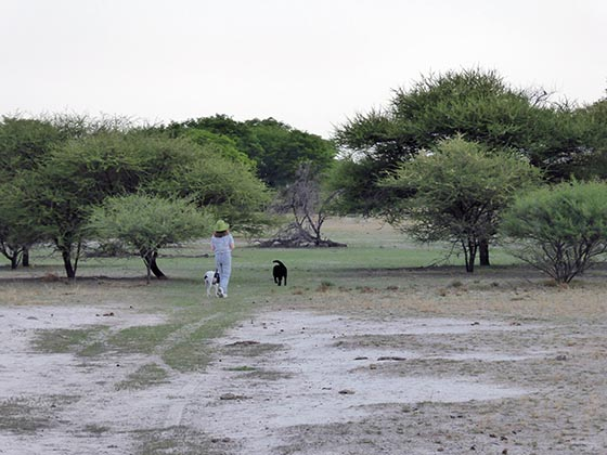 Jen walking dogs in a sandy pan in Maun.