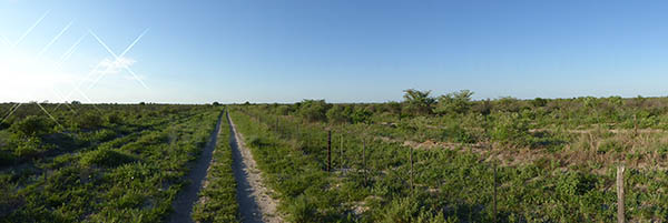 The sand track along the veterinary fence.