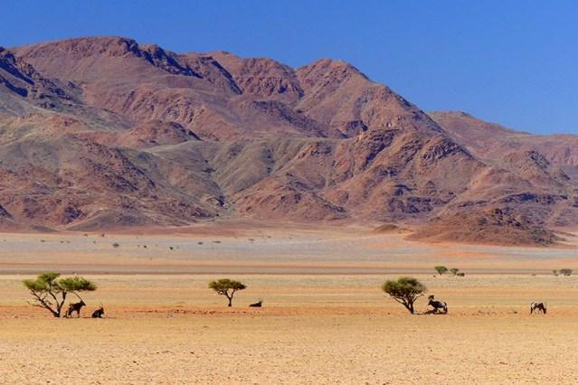 Gemsbok, oryx gazella, Namib Desert, Namibia