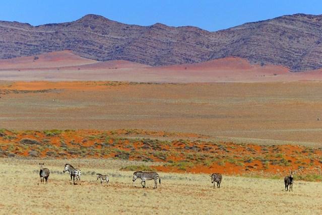 Red sands creep into mountains, Namib-Naukluft National Park