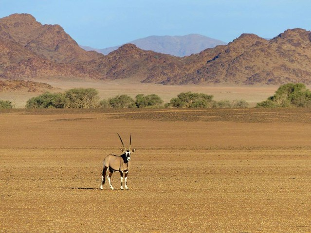 Gemsbok at Sesriem, Namib-Naukluft National Park