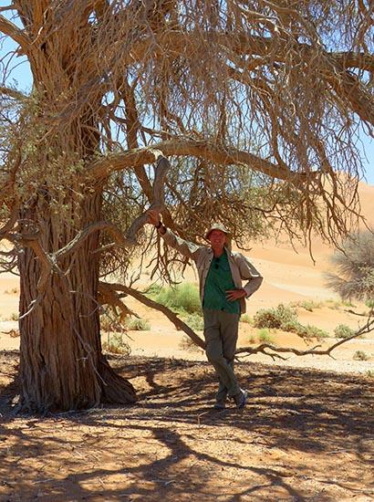 Mike's Shade, Namib-Naukluft National Park