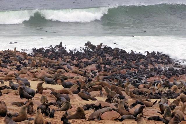Cape Fur Seals, Cape Cross, Namibia