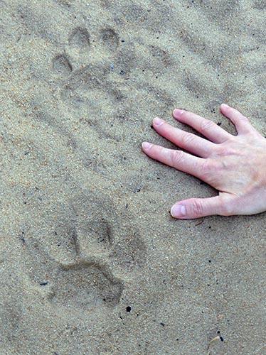 Cat Tracks, Mangetti National Park