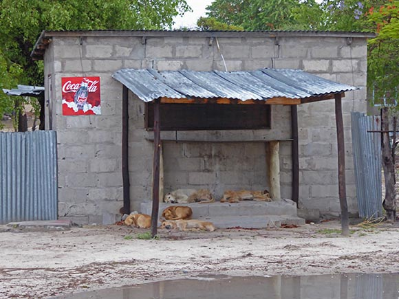 Dogs sleep under Coca-Cola sign in Africa