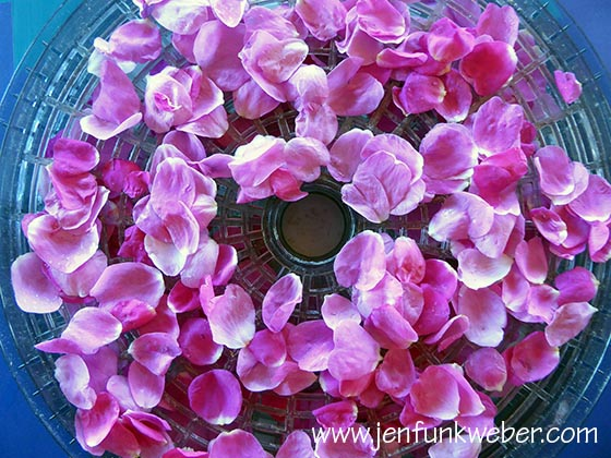 Rose Petals in the Dehydrator