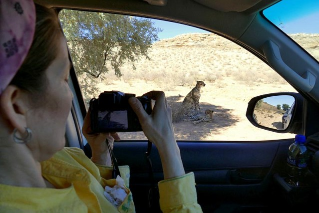 How close are the cheetahs, Kgalagadi Transfrontier Park, photo by Mike Weber, Jen Funk Weber