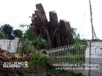Pohon beringin di Jl. KPB Suprapto yang tumbang sudah dibersihkan