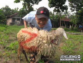 Saya dan Domba