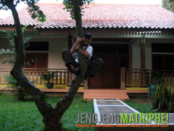 Nemplok di pohon belimbing