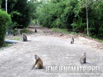 Monyet Maccaca yang berkeliaran