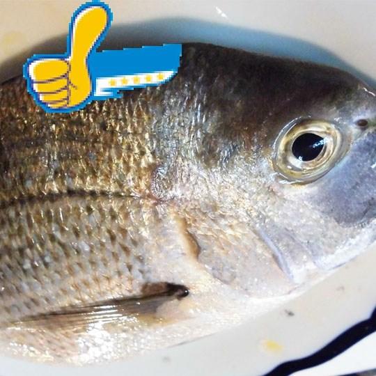 迦魶魚-冷凍食品-正益魚行 / 正賓商行 生鮮冷凍食品批發-