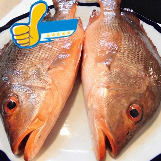 紅澤魚-冷凍食品-正益魚行 / 正賓商行 生鮮冷凍食品批發-