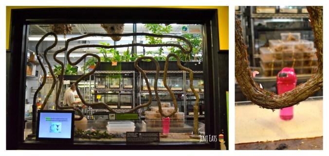 Ant exhibit Collage