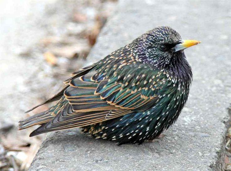 Spring is coming  Jeni the Bird Nerd