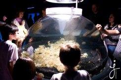 JLongo_Aquarium_1195_web