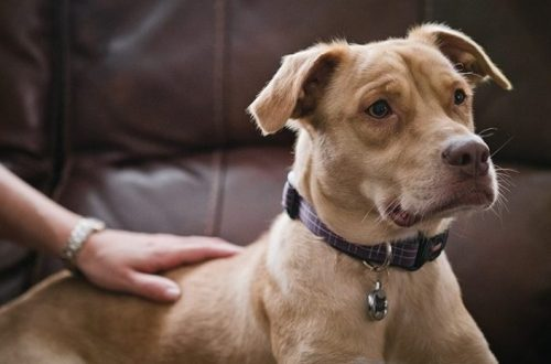 Seeking Their Somebody: For the Dogs at Animal Control, There's No time Like Right Now