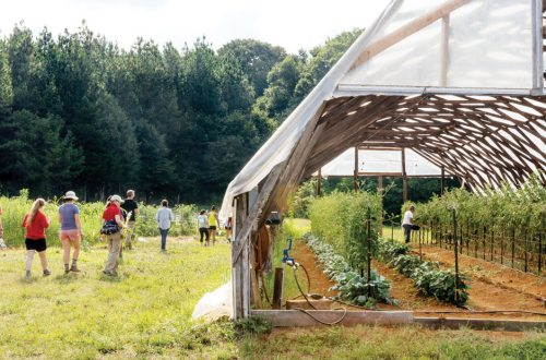 Soil School: A community farm outside of Charlotte helps a new crop of farmers learn and grow