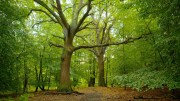 Epping Forest6