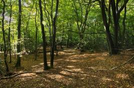 Epping Forest8