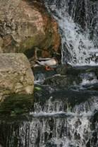 Holland Park12