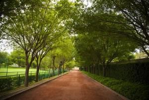 green-walkway_640